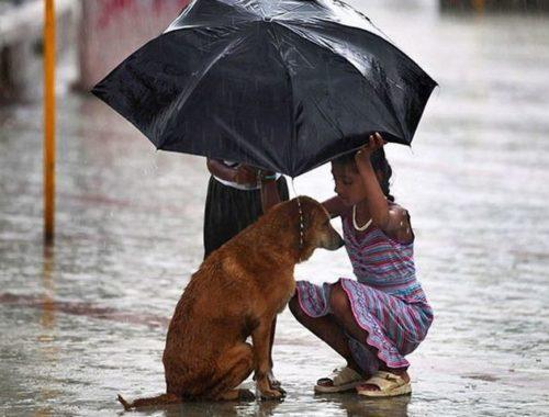 Как в детях воспитать доброту